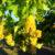 La produzione di Vernaccia di San Gimignano verso il 'carbon neutral'
