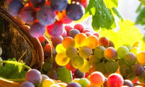 Vino nella GDO: aumentano gli acquisti di vini DOC e spumanti