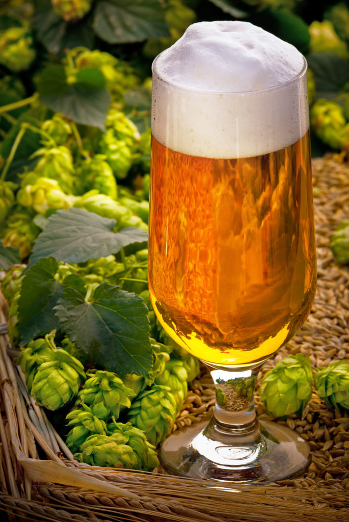 glass of beer with hop cones and barley